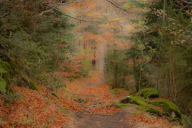 Viajar por Aragón – Valle de Hecho – Selva de Oza
